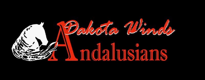Dakota Winds Andalusains